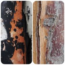 Rust and bark