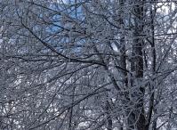 Snow-leaves, Zakopane